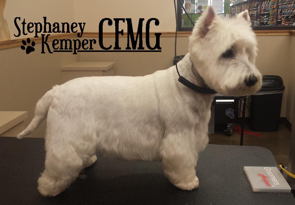 West Highland Terrier grooming by Stephaney Kemper, CFMG
