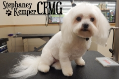 Maltese grooming by Stephaney Kemper, CFMG