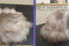 st-louis-cat-groomer-persian-grooming-bath