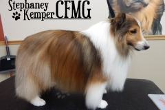 Shetland Sheepdog grooming by Stephaney Kemper, CFMG