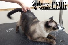 Siamese cat grooming by Stephaney Kemper, CFMG