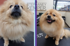 st-louis-cat-groomer-stephaney-kemper-pomeranian-grooming