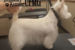 West Highland Terrier grooming by Stephaney Kemper, CFMG